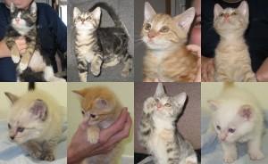 Abdula, Bowersox, Cavil, Cowell, Honshu, Jackson, Kara, and Yokozawa