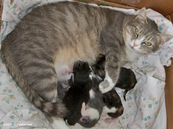 Poppie and kittens