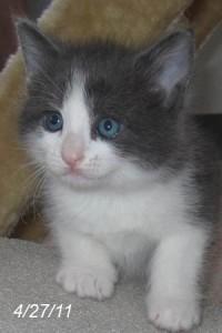 Silverlight, 5 weeks old