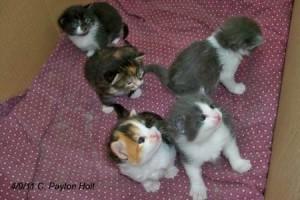 Kittens 04-09-11