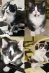 A kittens