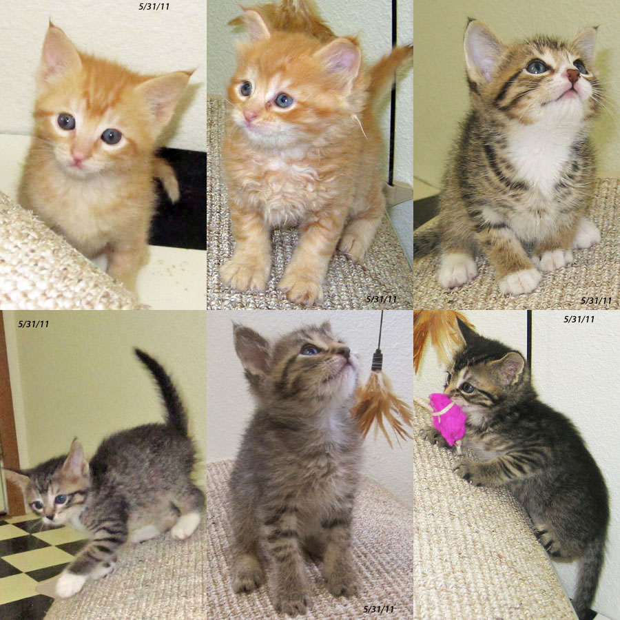 B kittens