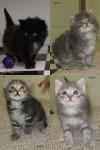 C kittens