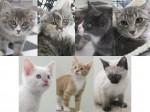 Kittens listed 7-15-11