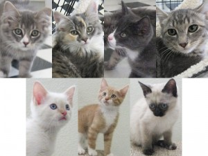 (top row) Durango, Donastia, Delgado, DonBenito (bottom row) Pattani, Rocket, Lampang