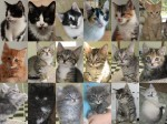 7-2-11-adoptees-cats