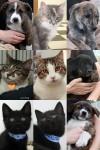Adopted through 8-12-11