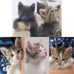Peanut Kittens