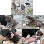 LeMutte Pups 8-4-11
