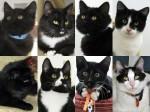 Black Tie Special kitties