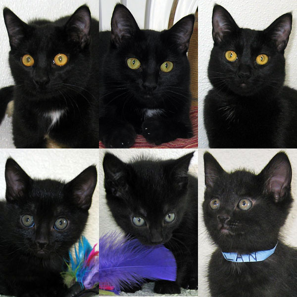 6 black cats