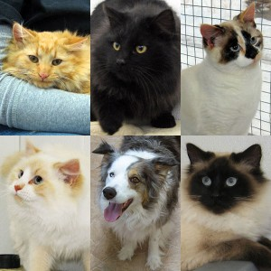 6 Newly Adoptable Pets