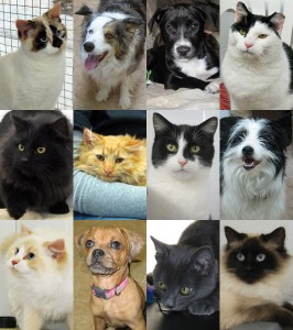 TOP: Acorn & Tamarack (who went home together), Rex, Venus (now COCO) MIDDLE: Albatross and Adelie (now SHADOW and ABBIE, they went together), Tigger, and Snoopy BOTTOM: Akiko (now EDITH TINKER BELL), Doma (now LULU), Payton (now ESTHER), Azumi