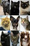 03-17-12-adoptees