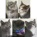 Kittens for adoption 4-6-12