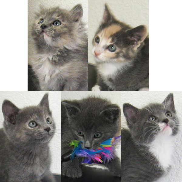 Kittens for adoption 4-6-12