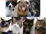 06-02-12 adoptees
