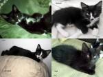 A-name litter of kittens, born 5/4/12