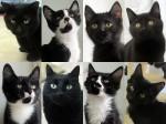 Black cat blowout