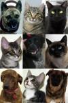 01-19-13-adoptees
